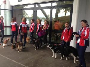 Det norske laget klare for veterinærkontroll.