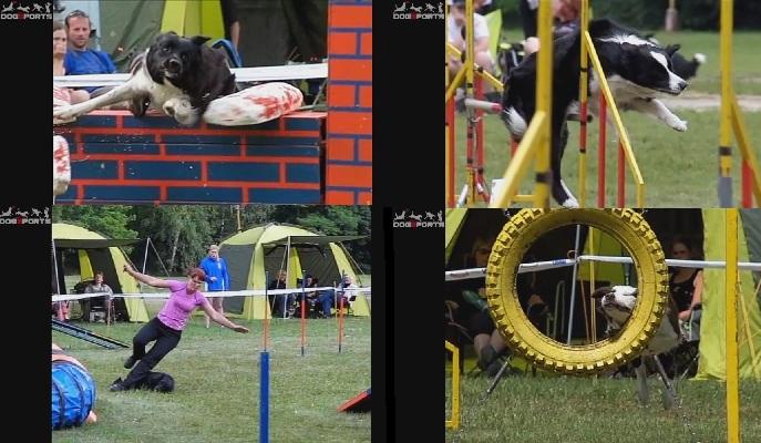 Glimt fra filmen som viser litt av det hundene våre må tåle. Screenshots fra dogsports.cz