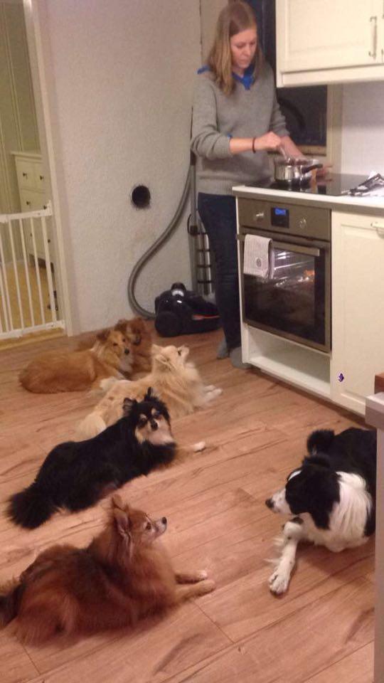 Seks hunder som håpet det skulle bli kalkunmiddag på dem også...