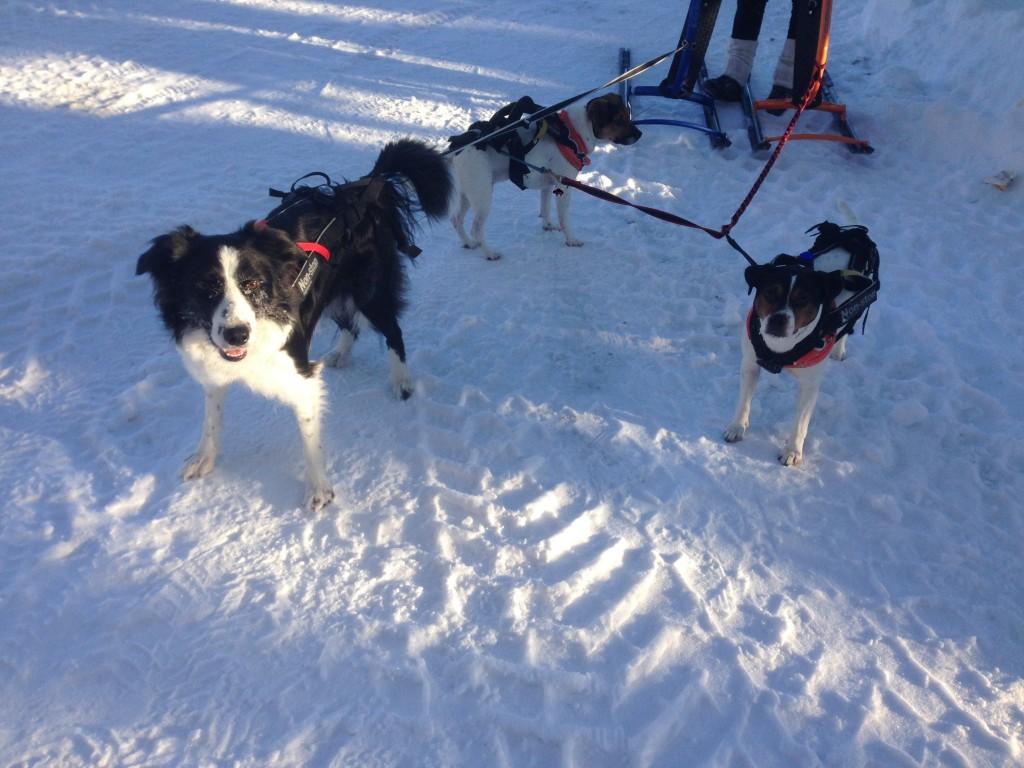 Jess, Figaro og Tapper på tur.