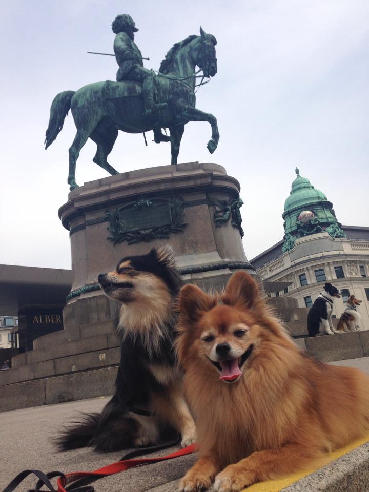 Max og Tequila nyter livet i Wien sommeren 2013, på veg til European open i Ungarn.