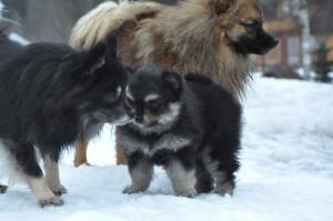 Det er ikke uten grunn at jeg kaller henne Tequisbjørnen innimellom! Stram lita berte med flokken sin som ca seks uker gammel baby.