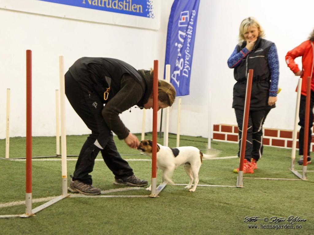 Noen prøvde seg på alleslalom. Litt hjelp for å få hundene til å skjønne at de skulle løpe rett fram gjennom hele alleen.