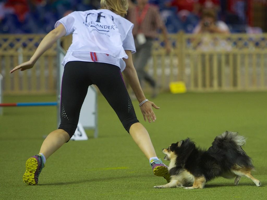 Tøffe sporter sliter på kroppene til hundene - hva skal man ta hensyn til og tenke på når en unghund skal forberedes på dette? Foto: Watts Photography