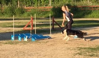 Lengdehopp prøvde Jess for første gang mandag, og andre gang i dag. Null problem å hoppe langt!