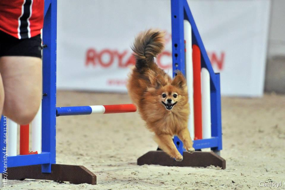 Formålet med antidopingregelverket er å hindre at hunder som har fått visse typer behandling fremføres til start/bedømmelse på offisielle og uoffisielle utstillinger, prøver og andre konkurranser arrangert av NKK og NKKs medlemsklubber eller -forbund.