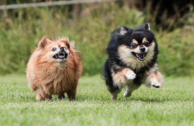Dyrevelferdsloven hund