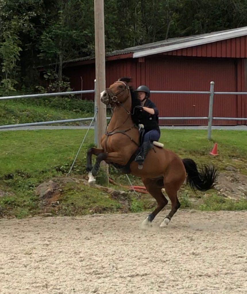 Vanskelig hest