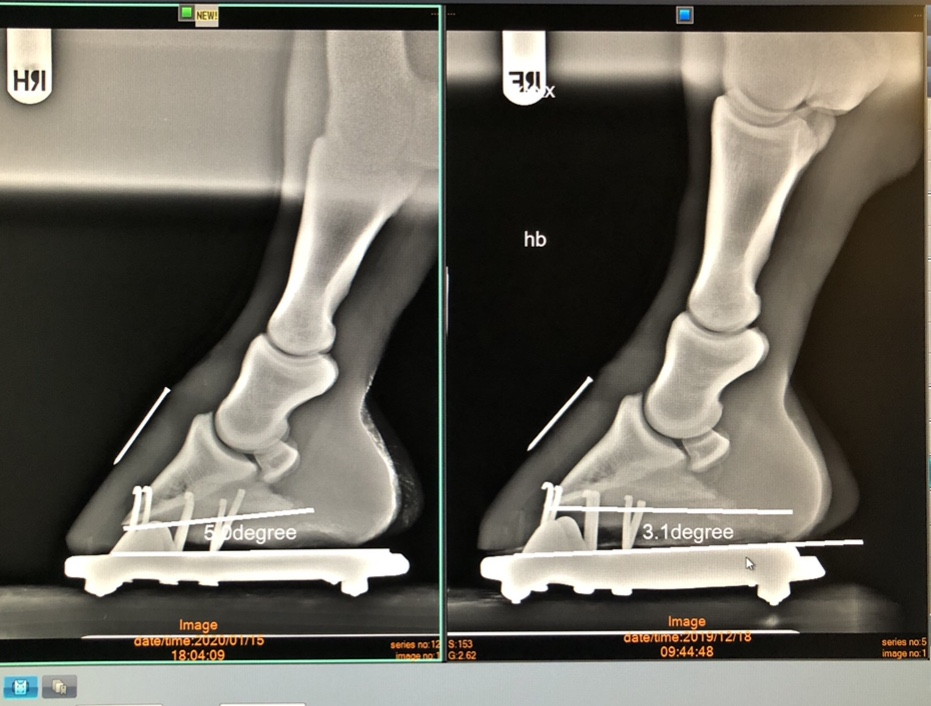 Røntgenbilde Daisy, Viser positiv og riktig vinkel på første bilde og negativ vinkel på bildet til høyre.