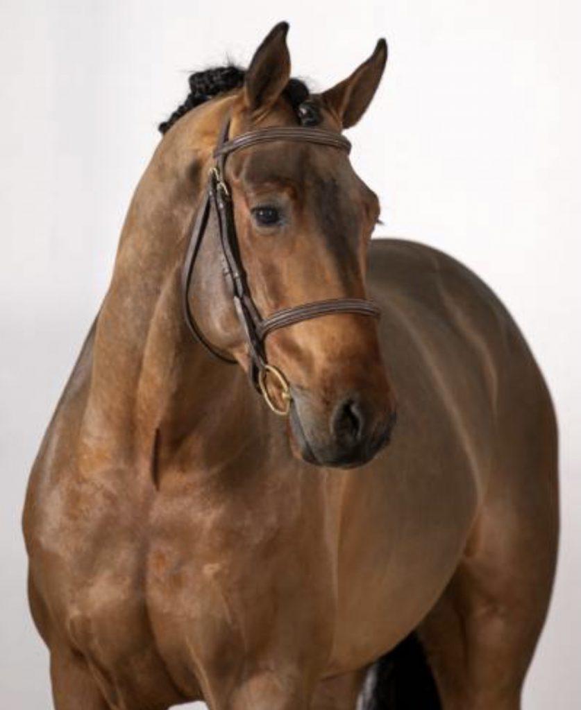 Min nye hest leandro. Brun vallak